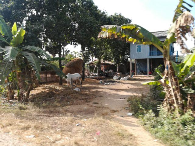 カンボジアカンダール州の民家